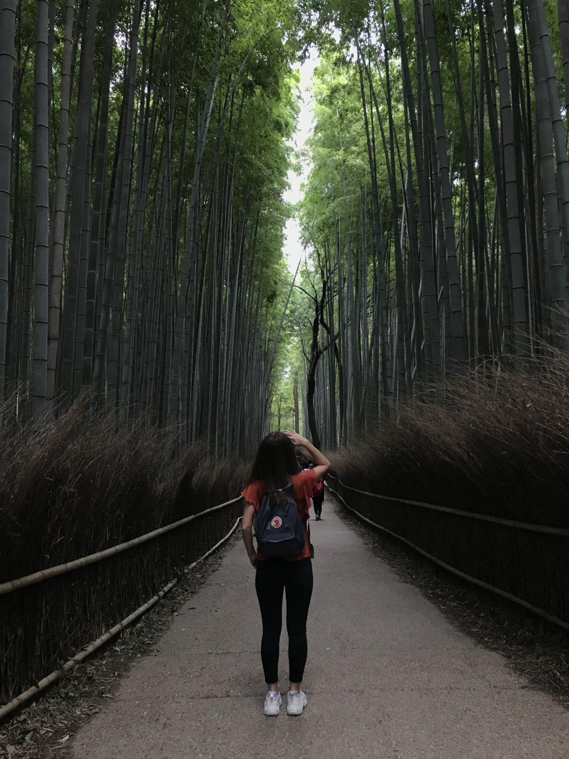 bambu ormanı kyoto